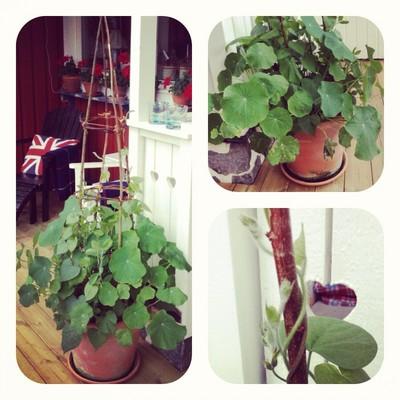 Klättertorn för växter