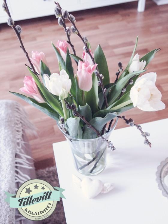 Tulpaner med videung